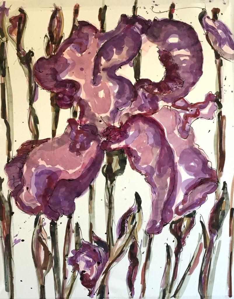 Iris 75-125 cm