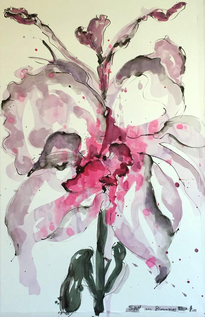 Rose Iris 75-125 cm