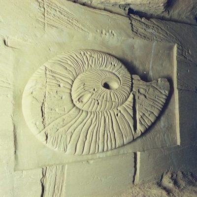 Grote schelp sculptuur in Mergelgrot-wand zuid Limburg 250-150 cm