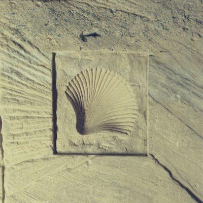 Kleine schelp sculptuur in Mergelgrot-wand zuid Limburg 30-30 cm